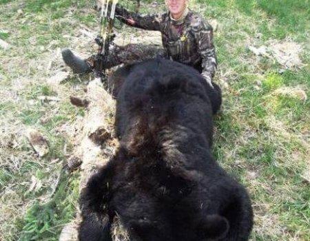 wta_1531_WOSKLD_bear9