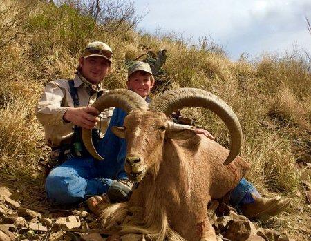 Trophy West Texas Aoudad Hunts